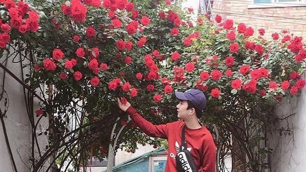 'Căn nhà với cánh cổng hoa hồng' đang làm thổn thức cư dân mạng vì quá lãng mạn
