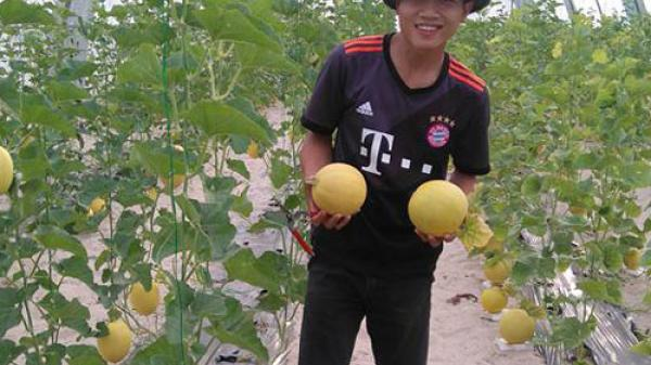 Quảng Bình: Mô hình trồng dưa lưới trong nhà màng cho hiệu quả kinh tế cao