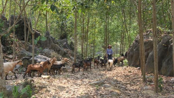 Hung Lầm - Địa điểm trải nghiệm đầy thú vị với những món ăn dân dã đậm đà hương vị thôn quê