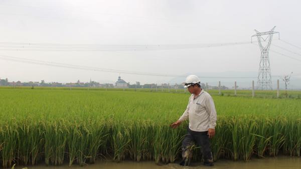 Vua lúa ở Quảng Bình