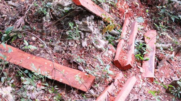 Khởi tố bắt giam 20 đối tượng liên quan đến 2 vụ phá rừng lớn ở Quảng Bình