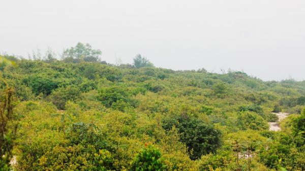 """Quảng Bình: Cả làng cùng bảo vệ """"báu vật"""" rừng trâm bầu cổ thụ trăm tuổi"""